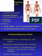 11 Skeletal Development1