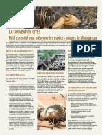 La convention CITES - Outil essentiel pour préserver les espèces uniques de Madagascar (WWF)