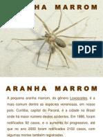 Aranha Marrom