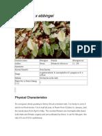Elaeagnus x Ebbingei Plants for a Future