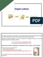 Organ Culture SMP