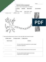 Nervous System Worksheet