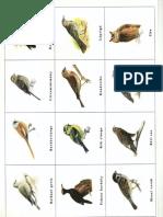 itt telelő madarak_memória0003