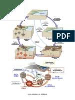 Ciclo Geologico de Las Rocas