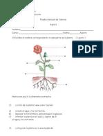 Ctf Formato - Copia
