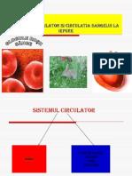 Circulaţia sângelui la iepure-1