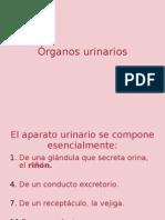 Órganos urinarios