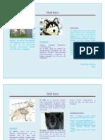 TRIPTICO (folleto)