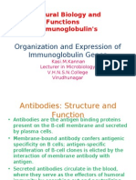 Organization and Expression of Immunoglobulin Genes
