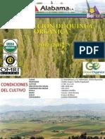 PRODUCCIÓN DE QUINUA ORGÁNICA