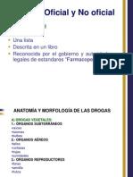 Morfologia 2