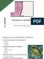 Tema IV BOTÁNICA GENERAL Morfología Vegetal