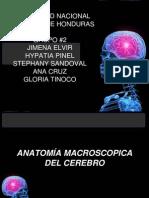 Grupo 2 - 7am Anatomia Macroscopica Del Cerebro.