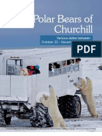 129732548 2013 Polar Bears of Churchill