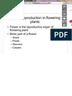 Biologi Zzs Plant
