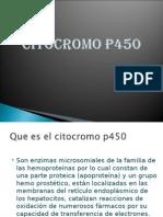 Citocromo P450 daph