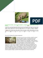 Zeci de Rinoceri de Nepal