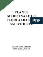 Plante Cu Flori Albastre Sau Violete