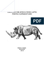 Rinocerii Pierd Lupta Pt Supravietuire