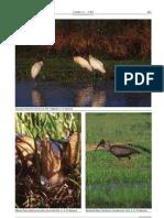 13- El Bagual - Laminas Aves