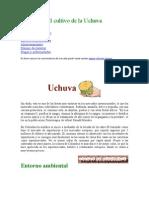 El Cultivo de La Uchuva-AGUAYMANTO