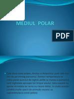 Mediul Polar