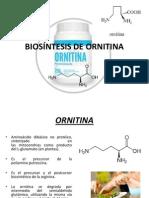 alcaloide ORNITINA