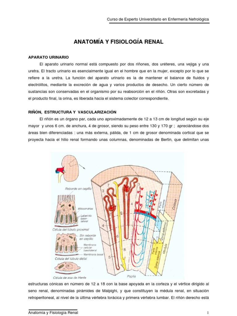 Unlock-Anatomia y Fisiologia (Libro)