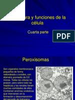 Celula Humana IV
