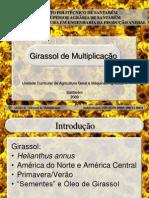 AGRICULTURA GERAL E MÁQUINAS AGRICOLAS II - Apresentação (girassol de multiplicação)
