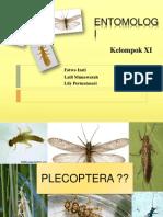 PPT Plecoptera