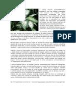 ARQUIVO PLANTAS