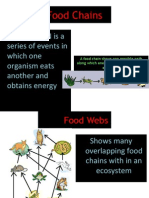foodchains and food webs