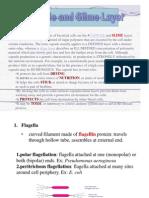Capsule, Flagella, Pili, Endospores
