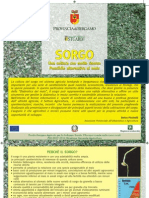 SORGO (Sorghum spp.) - Scheda Tecnica