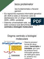 6 Sinteza Proteinelor La Eucariote