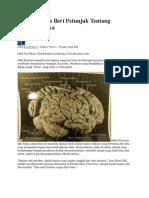 Otak Einstein Beri Petunjuk Tentang Kejeniusannya From Yahoo