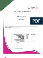Practica 10 Biologia