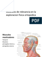 Musculos de Relevancia en La Exploracion Fisica Ortopedica