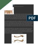 anatomi esktremitas atas