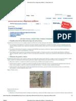 Estructuras Tierras y Diagramas Unifilares - Monografias