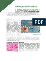 teorasdelenvejecimientocelular-120501162150-phpapp02.doc