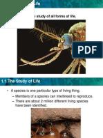 biology slide 1