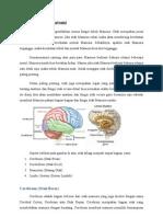 Review Neuroanatomi