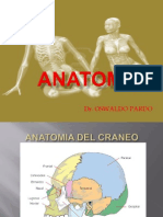 Presentacion de Anatomia