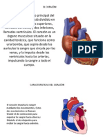El Corazon Diapositiva