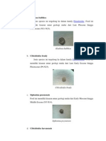 Foraminifera Benthonik.docx