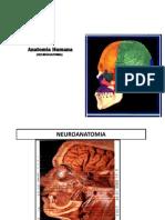 Presentación2 neuroanatomia iv
