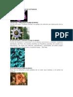 Plantas y Animales en Peligro de Exinticion