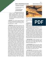 Steinberg et al (2008)-Sphaerodactylus vincenti.pdf